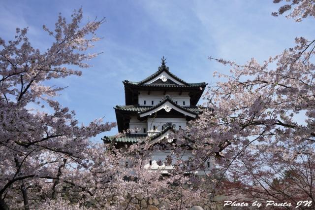 hirosaki1504-0044.jpg