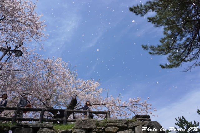 hirosaki1504-0049.jpg
