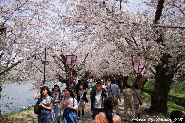 hirosaki1504-0067.jpg