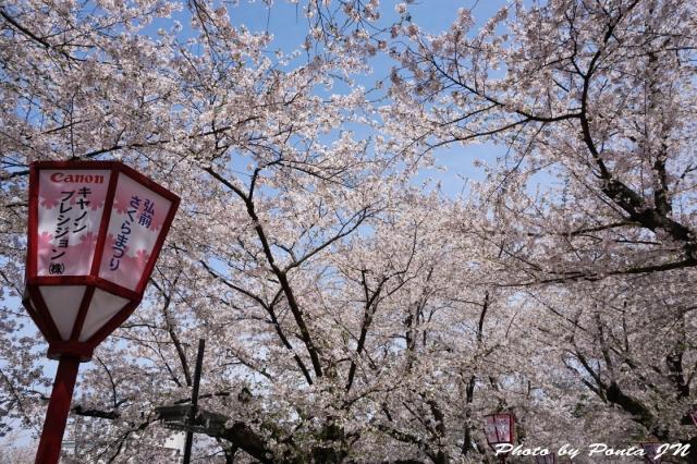 hirosaki1504-0068.jpg