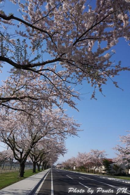 misawa15-0006.jpg