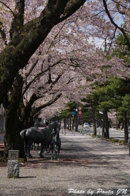misawaenburi15-0013.jpg