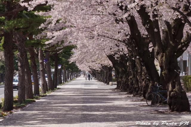misawaenburi15-0014.jpg