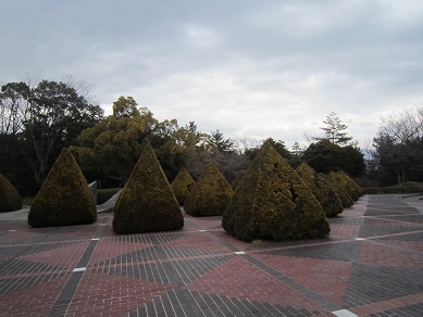 四角すいの木
