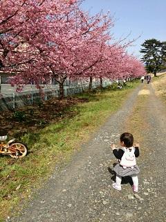 美和桜と孫1歳