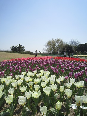 吉田公園3