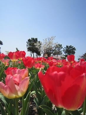 吉田公園5