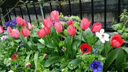 春の庭2015 4月3日 2