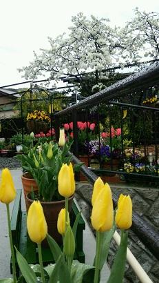 春の庭2015 4月3日