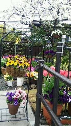 春の庭2015