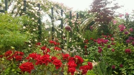 赤いバラとトンネル