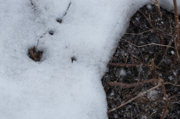庭の雪解け3