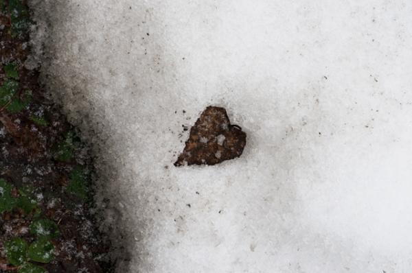 庭の雪解け6