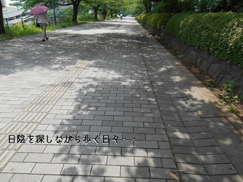DSCN1870.jpg