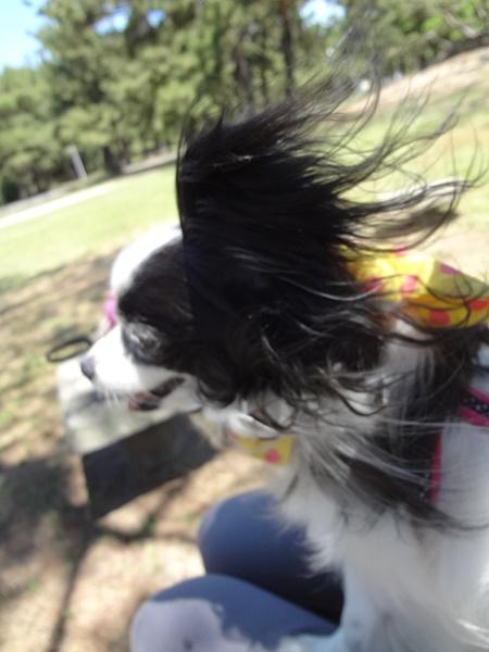 風がビューン