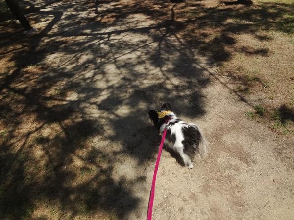 木の影を歩く