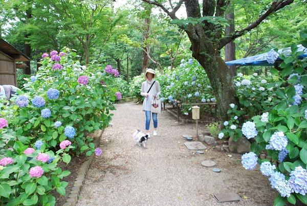 ワンコ散歩OK(久米寺)