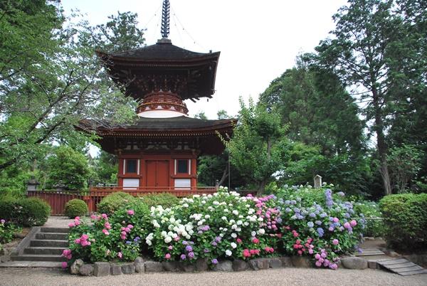 多宝等と紫陽花(久米寺)
