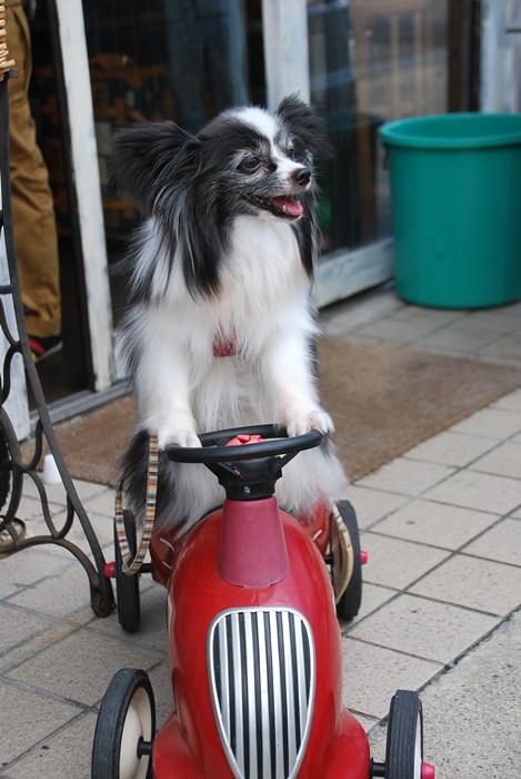 小梅ちゃんスクーター