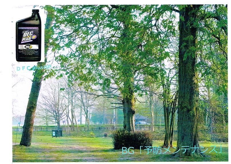 「BG予防メンテナンス」樹木20150629