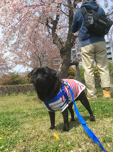 枝垂れ桜とうるま