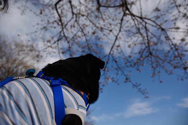 桜の木の下で休憩ちう