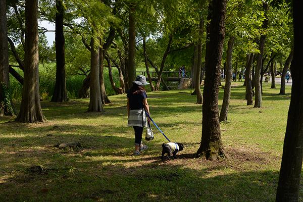 木陰を散歩