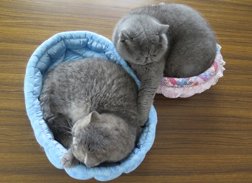 18)ベッドの大きさが逆?
