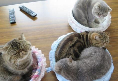 8)一番小さいベッドははちゅね(笑)