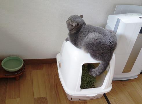 5)トイレの出入り口封鎖中(笑)
