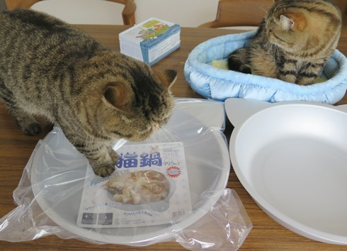 1)ねこ鍋登場!