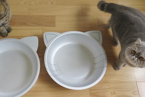 9)ねこ鍋が進化してるれつねー