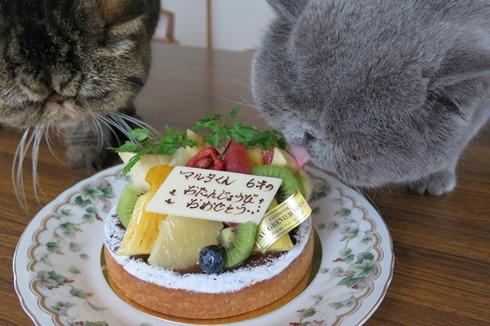 3)ボクのケーキちゃんでずよ!
