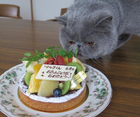 5)僕のケーキでずか?