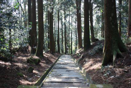 2015霧島神宮散策