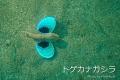 10_20150617155056f9f.jpg
