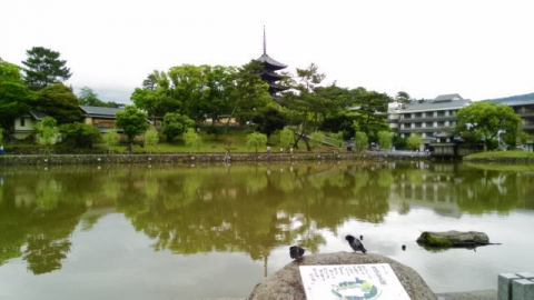 猿沢池o11