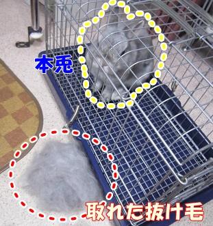 sinba20150316-3.jpg