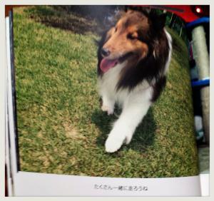 2015-04-07-01-52-58_deco.jpg