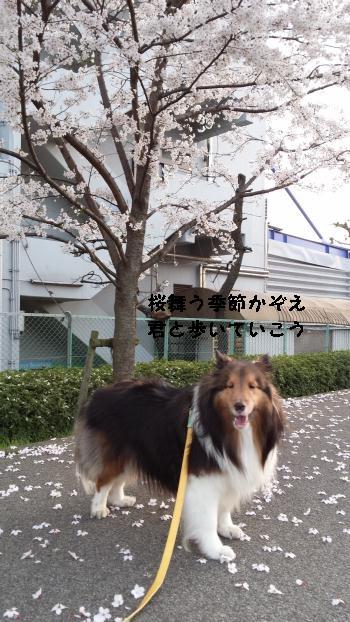 20150331_174644.jpg