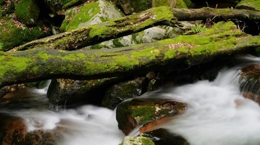 8872瀬戸の滝156133
