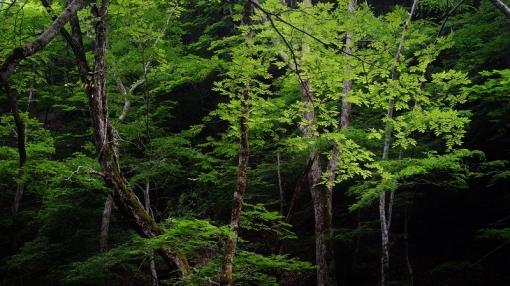 8836瀬戸の滝156131