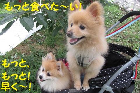 IMG_4900_2015061922475236e.jpg