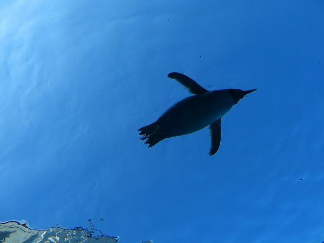ペンギン (5)