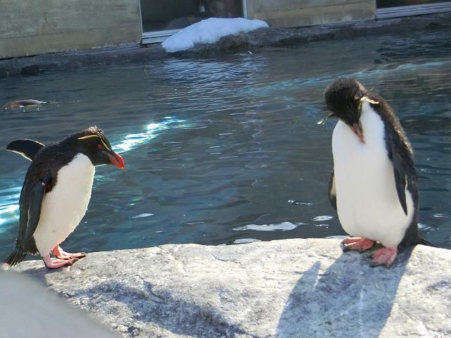 ペンギン (3)