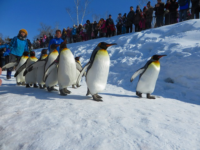 ペンギンの散歩 (2)