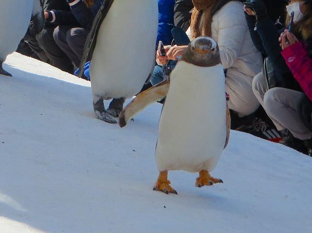 ジェイツーペンギン