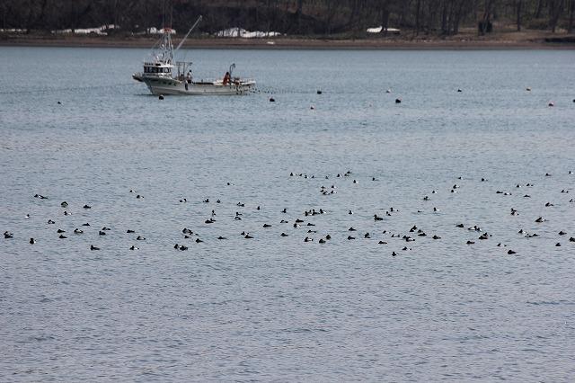 舟と水鳥 (2)