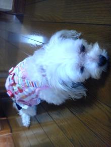 『なな』『ひな』のわんこblog-DVC00184.jpg