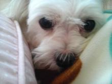 『なな』『ひな』のわんこblog-DVC00228.jpg